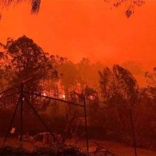 Bombeiros, Funcionários e Populares Salvam Todos os Animais de um Zoológico Australiano em Chamas.