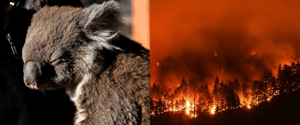 Incêndio Descontrolado na Austrália já Matou Mais de Meio Milhão de Animais!