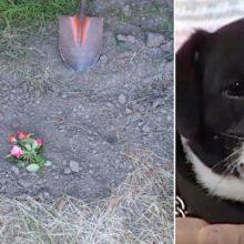 Família Enterra seu Cachorro Atropelado, Mas Depois de Horas ele Milagrosamente Aparece à Sua Porta.