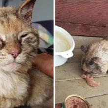 Gato Milagrosamente Retorna à Casa da Família Após Sete Dias Perdidos em Incêndios