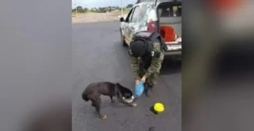 A Guarda Municipal de Cascavel entrega comida e água aos animais que encontram na rua durante as patrulhas.
