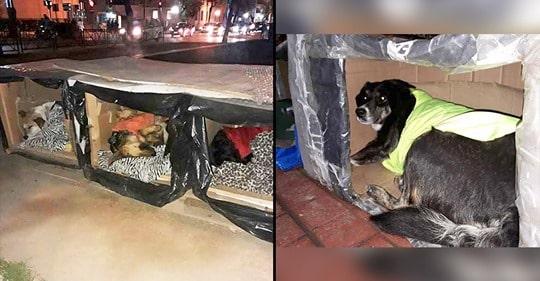 Herói Anônimo Fabricou Caixas Térmicas para Cães de Rua Resistirem ao Frio