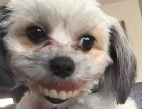Homem perde dentaduras, olha embaixo da mesa e vê um cachorro com um novo sorriso