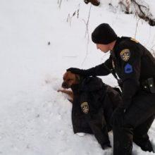 Policial Abriga Cachorro Gravemente Ferido Com seu Próprio Casaco!
