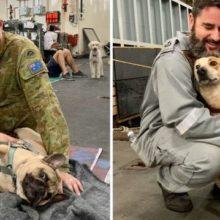 Soldados Abrigam Mais de 100 Cães Sobreviventes de Incêndios em Navio.