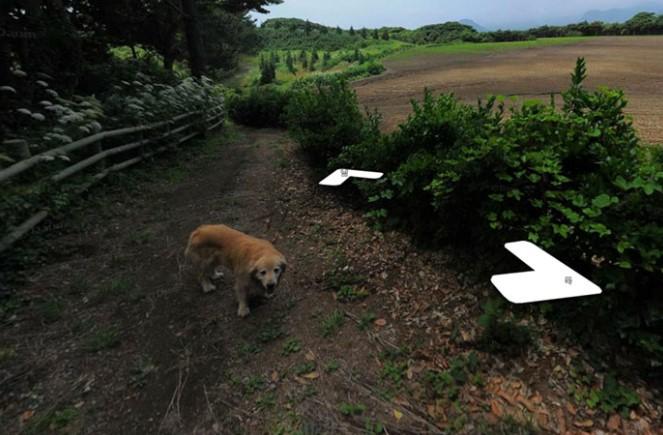 Um Cachorro Persegue o Fotógrafo do Google Streetview