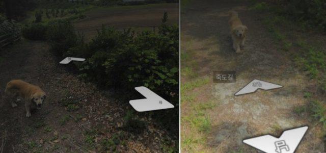 Um Cachorro Persegue o Fotógrafo do Google Streetview e Entra Furtivamente em Todas as Fotos