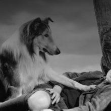 A Ciência Explica por que Perder um Cachorro pode ser tão Doloroso Quanto Perder uma Pessoa.