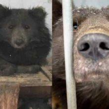 Cachorro com Cara de Urso foi Resgatado e Teve Milhares de Pedidos de Adoção