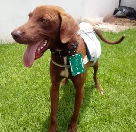 Cachorro Resgatado Vira Mascote em Posto de Gasolina, Ganha Uniforme e Casinha.