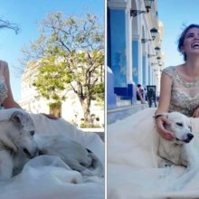 Cão de Rua Invade Sessão de Fotos de Debutante e Ela Não Hesita em Eternizar Esse Momento.