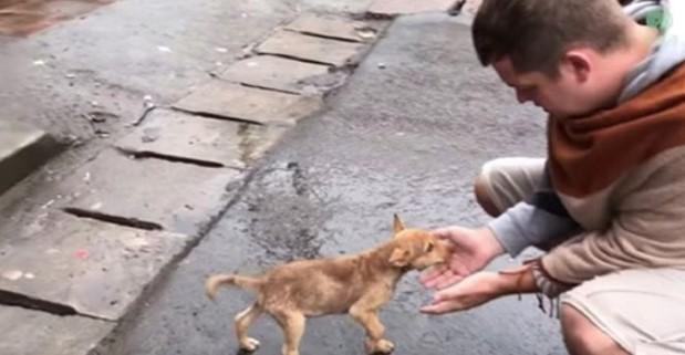 Cadelinha Tenta seu Último Recurso Para que Alguém olhe Para ela Enquanto Luta por sua Vida.