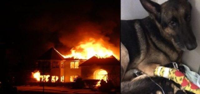Cão Policial já Aposentado Sente o Chamado do Dever e Salva sua Família do Fogo