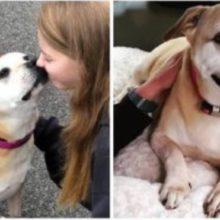 Depois de 6 anos no Abrigo, Cachorrinho que Havia Sido Abandonado Finalmente Encontrou o Lar que Sonhava.