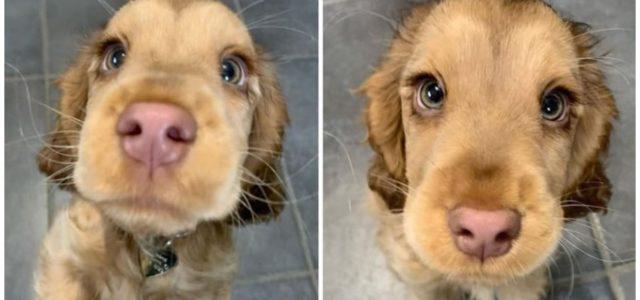 Essa cachorrinha fofa conquistou a internet com seus lindos olhos.