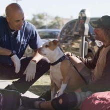 Este homem é veterinário e trata animais em situação de rua gratuitamente.