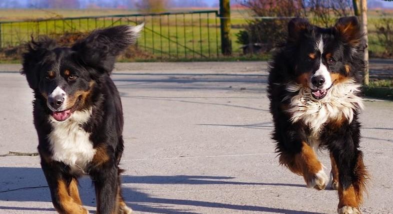 Holanda Ganha o Título de Primeiro País Sem Cachorro Abandonados