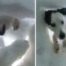 Homem que Estava Soterrado na Neve, Registra Exato Momento em que é Resgatado por um Cão.