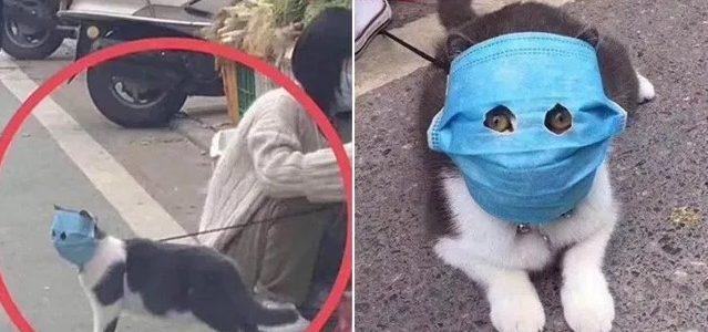 Máscara facial humana com furos oculares é dada a gato para proteger do coronavírus!
