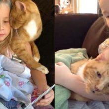 Menina Canta Para seu Gato de 14 anos Pela Última Vez e Ele Morre Pacificamente em seus Braços.
