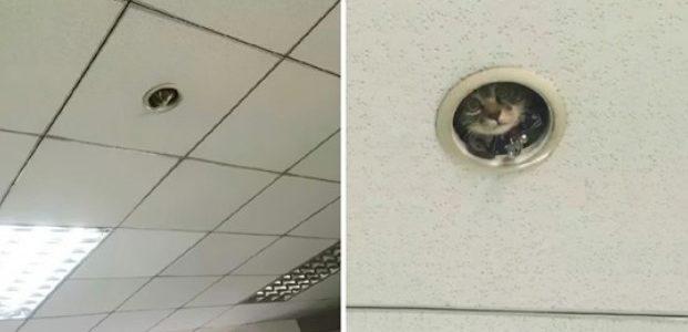 Os Funcionários de um Escritório se Sentiam Vigiados o Tempo Todo Até Olharem Para o Teto.