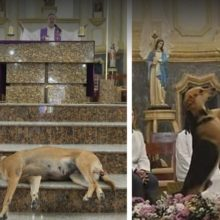 Padre João Paulo, o Padre que Transformou sua Igreja em Abrigo para Animais.