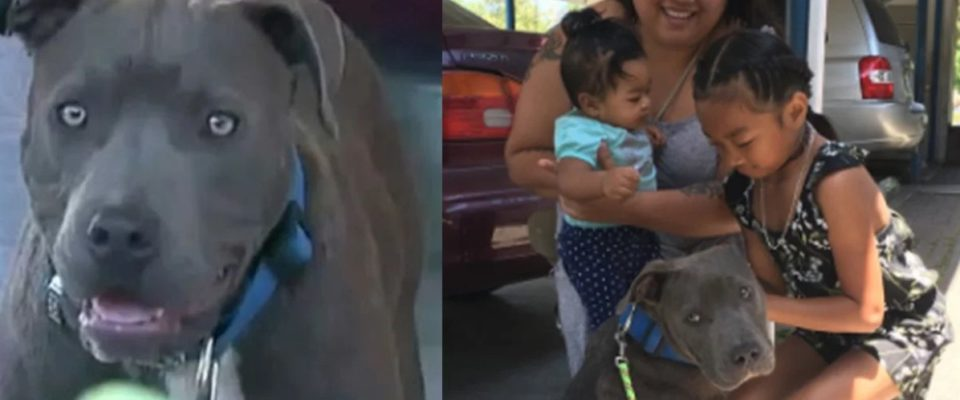 Pitbull Arrasta Bebê Pela Fralda e a Salva de Incêndio