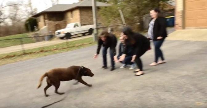 Resgataram 166 Animais e Entre eles Encontraram um Cachorro que Estava a 5 anos Desaparecido