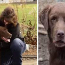 Resgataram 166 Animais e Entre eles Encontraram um Cachorro que Estava Desaparecido a 5 anos.