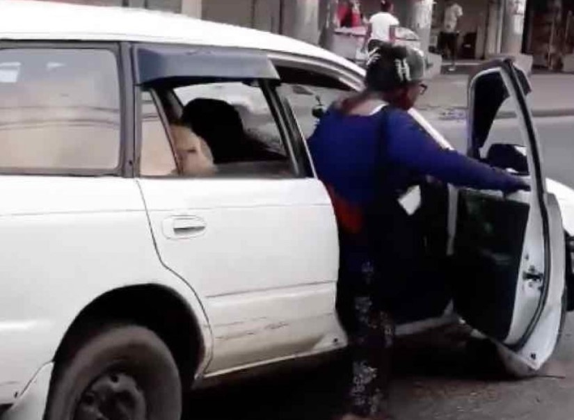 Taxista Aceita Levar 8 Cães de Rua em seu Carro a Pedido de Senhora Que os Adotou