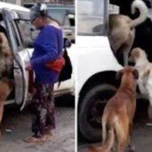 Taxista Aceita Levar 8 Cães de Rua em seu Carro a Pedido de Senhora Que os Adotou.