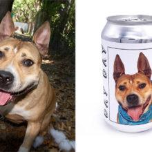 A Dona do Cachorro que Escapou em 2017 Reconhece o Animal na Fotografia Colocada na Lata de Cerveja.