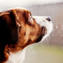 Viajar e Deixar os Pets Sozinhos em Casa Pode Gerar Multas e até a Perca do Animal.