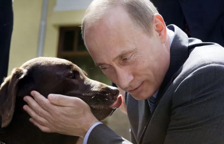 Vladimir Putin assina lei que proíbe crueldade com animais na Rússia