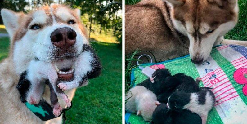 Cadela resgata e cuida de 7 gatinhos perdidos