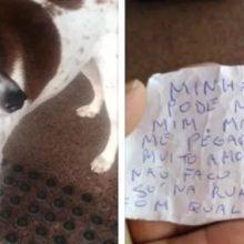 Cão ganha novo lar após se abandonado com bilhete:'trate-o com amo'