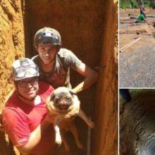Cão que ladra, pede socorro – O animal havia caído em um buraco com quatro metros de profundidade.