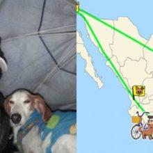 Este Homem Resgatou 500 Cães Abandonados e os Levou Para Casa