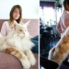 Fotos de um dos maiores gatos do mundo mostram que ele nasceu para ser uma celebridade