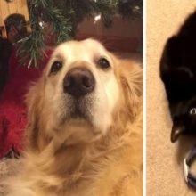 Gatinho Encontrou a Coleira de Seu Falecido Cachorro e Ela não Segurou as Lágrimas