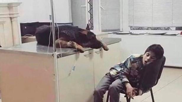 Menino passa a noite toda ao lado de seu cachorro