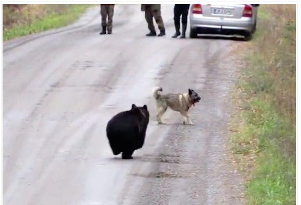 No Canadá, cachorro sai para brincar e ao retornar, trás um amigo não tão convencional.