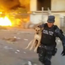 Policial bota sua vida em risco para salvar um cachorro de incêndio