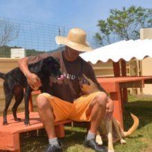 Presos cuidam de cães abandonados e reduzem pena em SC