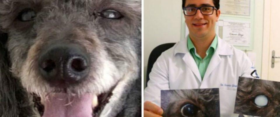 Veterinário faz cirurgia inédita e devolve visão a cãozinho cego