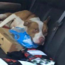Cachorro entrou no carro de um casal e recusou-se a sair: a razão disso comoveu milhares de pessoas