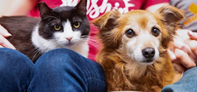 Gato faz Amizade Com um Cachorro e Faz sua Família Adotá-lo
