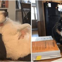 8 animais que têm paixão por desobedecer a seus donos