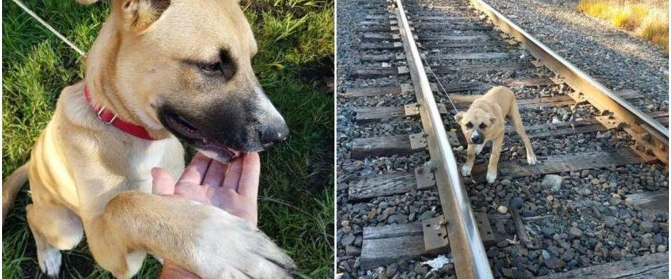 Cachorro é visto amarrado ao trilho e o que acontece depois e encanta a todos