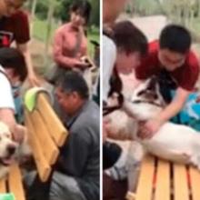 Cachorro Atrapalhado Fica Preso em Banco e seu Resgate Arrancou Risada de Todos.